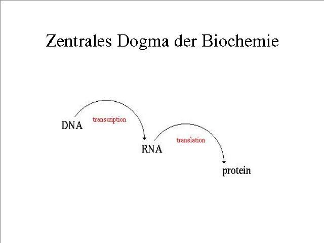 Zentrales Dogma der Biochemie